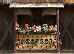 Italy, South Tyrol, Alto Adige, Dolomites, near San Vigilio di Marebbe, Pieve di Marebbe: farmhouse, balcony, flowers, at Valle di Tamores, tributary valley of Val Badia