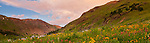 San Juan Mountains, CO<br /> Sunset clouds illuminate a wildflower meadow in American Basin featuring paintbrush (Castilleja rhexifolia), delphinium (Delphinium barbeyi) and sneezeweed (Dugaldia hoopesii)