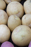 Round potatoes 'Vales Emerald' (gold skinned)