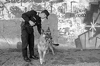 - Carabinieri, reparto Cinofili<br /> <br /> - Carabinieri, Dog Department