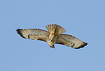 Monterey Bay Area, CA. Birds. 2010 Edit.