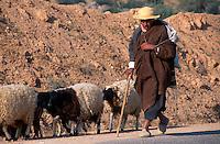 Schafe, Guellala, Djerba, Tunesien