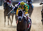 June 07, 2014: Palace Malice with Jonh Velazquez up wins the Met Mile at Belmont Park in Elmont New York. Alex Evers/ESW/CSM