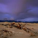 Approaching Storm, Tamarisk, Dunes, Death Valley National Park, California