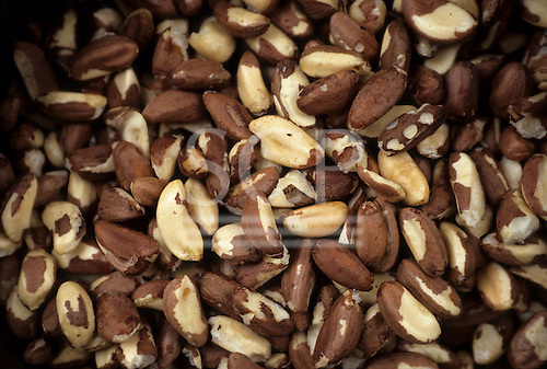 Amazonia, Brazil. Mass of shelled Brazil nuts (Bertholletia excelsa).