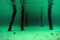 a view under neath a jetty, Wool Bay, South Australia, Australia, Southern Ocean