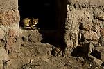 Domestic Cat (Felis catus) kitten in doorway, Ciudad de Piedra, Andes, western Bolivia