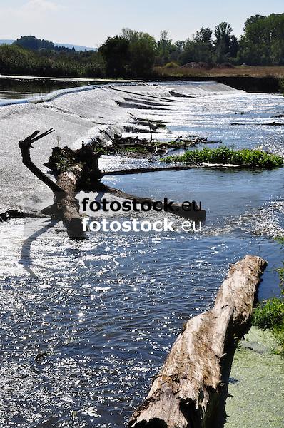 Baumstämme am Nahe-Wehr bei der Rumpf-Mühle in Gensingen