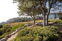 Manzanita groundcover and native Coast Oak trees (Quercus agrifolia) California native plant garden with home overlooking hills, Santa Barbara,