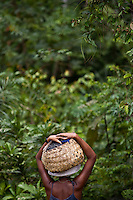 """Black woman carries basket full of acai fruits in the forests of Sao Raimundo Quilombo at Alcantara, Maranhao State, Northeastern Brazil. In a study of three traditional Caboclo populations in the Brazilian Amazon, acai palm was described as the most important plant species because the fruit makes up a major component of their diet, up to 42% of the total food intake by weight. In 2005, an article published by Greenpeace International stated that ?the tasty dark violet wine of acai is the most important non-wood forest product in terms of money from the river delta of the Amazon.? A 2008 Los Angeles Times article noted that while acai has been acclaimed by some sources as a renewable resource that can provide a sustainable livelihood for subsistence harvesters without damaging the Amazon Rainforest, conservationists worry that acai could succumb to the destructive agribusiness model of clear-cut lands, sprawling plantations, and liberal application of pesticides and fertilizer. In May 2009, Bloomberg reported that the expanding popularity of acai in the United States was """"depriving Brazilian jungle dwellers of a protein-rich nutrient they've relied on for generations."""