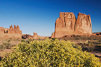 Courthouse Towers and Broom Snakeweed (Gutierrezia sarothrae), Arches National Park, Utah, USA, September 2007