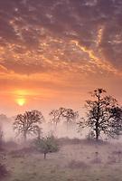 Sunrise trees and fog near Corvallis, Oregon.
