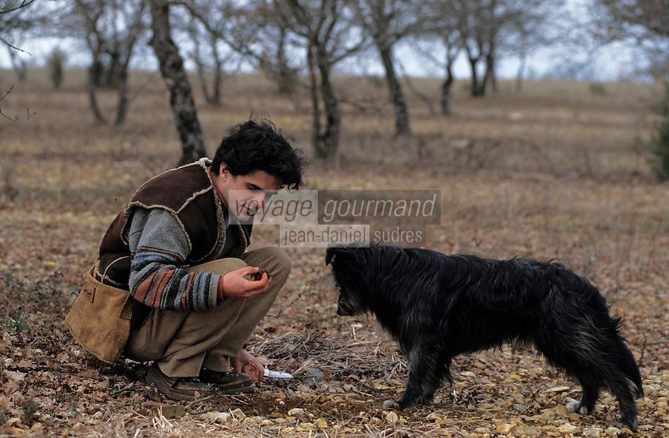 """Europe/France/Midi-Pyrénées/46/Lot/Causse de Limogne/Lalbenque: François Chaumeil et son chien """"Mikou"""" lors d'un cavage - AUTORISATION N°256"""