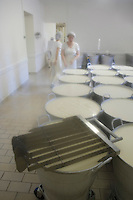 Europe/France/Normandie/Basse-Normandie/14/Calvados/Pays d'Auge /Saint Loup-de-Fribois: Camembert au lait cru moulé à la louche de la fromagerie du village - empressurage du lait