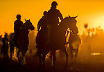 ARCADIA, CA - NOV 02: Horses walk on the track during morning workouts at sunrise at Santa Anita Park on November 2, 2016 in Arcadia, California. (Photo by Scott Serio/Eclipse Sportswire/Breeders Cup)