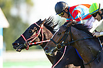KYOTO,JAPAN-OCT 25: Contrail,ridden by Yuichi Fukunaga,wins the Japanese triple crown races with undefeated at Kyoto Racecourse on October 25,2020 in Kyoto,Kyoto,Japan. Kaz Ishida/Eclipse Sportswire/CSM