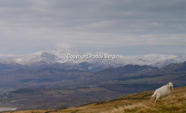 """A Winter view north to the Snowdon range. is the highest mountain in Wales, at an elevation of 1,085 metres (3,560 ft) above sea level, and the highest point in the British Isles outside the Scottish Highlands. It is located in Snowdonia National Park (Parc Cenedlaethol Eryri) in Gwynedd, and has been described as """"probably the busiest mountain in Britain"""". It is designated as a national nature reserve for its rare flora and fauna.<br /> <br /> Stock Photo by Paddy Bergin"""