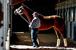 October 19, 2015:  Beholder stops and checks out the media at Keeneland Racecourse after arriving for the Breeder's Cup Classic with trainer Richard Mandella.  Candice Chavez/ESW/CSM