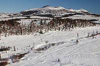 A team on the trail in the Beaver hills between Ophir and Iditarod during the 2011 Iditarod race..
