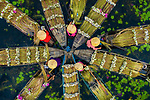 Workers harvest waterlillies by Khanh Phan