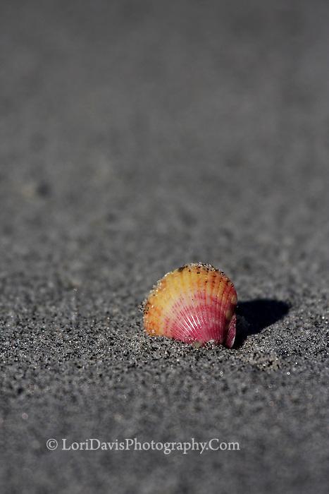 Pink Orange Shell