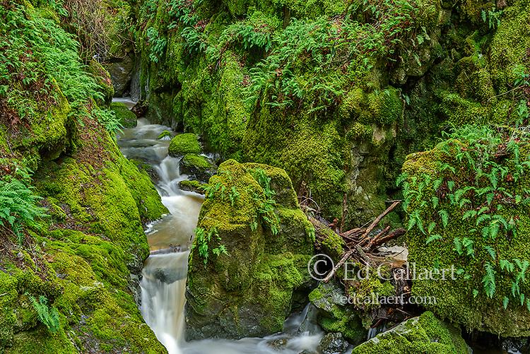 Falls, Cataract Canyon, Mount Tamalpais, Marin County, California