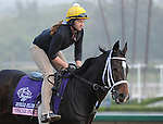 Oscar Party, trained by Wayne Catalano, exercises in preparation for the upcoming Breeders Cup at Santa Anita Park on November 1, 2012.