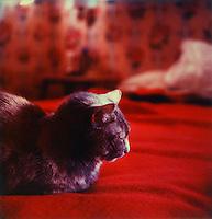 Sleeping cat<br />