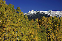 Mountain peak and  Aspen trees in fall colors, Flat Tops Wilderness, Colorado, USA, September 2007