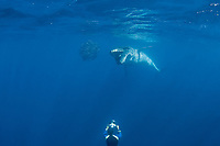 Bryde's whale, Balaenoptera brydei or Balaenoptera edeni, opens mouth to feed on baitball of sardines, off Baja California, Mexico ( Eastern Pacific Ocean ); photographer Brandon Cole at bottom of frame #2 in sequence of 6