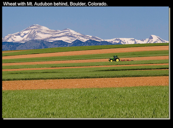 Wheat fields surround much of Boulder. Mt Audubon on the left.<br />