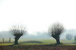 Europa, DEU, Deutschland, Nordrhein Westfalen, NRW, Rheinland, Niederrhein, Xanten, Naturschutzgebiet Xantener Altrhein, Bislicher Insel, Baeume, Typische Kopfweiden, Dunst, Gegenlicht, , Kategorien und Themen, Natur, Umwelt, Landschaft, Jahreszeiten, Stimmungen, Landschaftsfotografie, Landschaften, Landschaftsphoto, Landschaftsphotographie, <br /> <br /> <br /> [Fuer die Nutzung gelten die jeweils gueltigen Allgemeinen Liefer-und Geschaeftsbedingungen. Nutzung nur gegen Verwendungsmeldung und Nachweis. Download der AGB unter http://www.image-box.com oder werden auf Anfrage zugesendet. Freigabe ist vorher erforderlich. Jede Nutzung des Fotos ist honorarpflichtig gemaess derzeit gueltiger MFM Liste - Kontakt, Uwe Schmid-Fotografie, Duisburg, Tel. (+49).2065.677997, archiv@image-box.com, www.image-box.com]