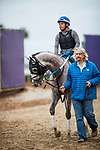DEL MAR, CA - NOVEMBER 01:  Iron Fist walks with Steven M. Asmussen, back to the barns after preparing for the Breeders' Cup Las Vegas Dirt Mile at Del Mar Thoroughbred Club on November 01, 2017 in Del Mar, California. (Photo by Alex Evers/Eclipse Sportswire/Breeders Cup)
