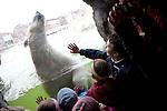 Europa, DEU, Deutschland, Nordrhein Westfalen, NRW, Ruhrgebiet, Gelsenkirchen, Zoo, Eisbar, Polarbaer, ZOOM Erlebniswelt, Kinder, Ursus maritimus, Kategorien und Themen, Tiere, Tier, Wildtiere, Tierfoto, Tierfotos, Tierphoto, Tierphotos, Tierfotografie, Tierphotographie, Wildlife, Tourismus, Touristik, Touristisch, Touristisches, Urlaub, Reisen, Reisen, Ferien, Urlaubsreise, Freizeit, Reise, Reiseziele, Ferienziele....[Fuer die Nutzung gelten die jeweils gueltigen Allgemeinen Liefer-und Geschaeftsbedingungen. Nutzung nur gegen Verwendungsmeldung und Nachweis. Download der AGB unter http://www.image-box.com oder werden auf Anfrage zugesendet. Freigabe ist vorher erforderlich. Jede Nutzung des Fotos ist honorarpflichtig gemaess derzeit gueltiger MFM Liste - Kontakt, Uwe Schmid-Fotografie, Duisburg, Tel. (+49).2065.677997, ..archiv@image-box.com, www.image-box.com]