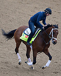 APRIL 30, 2015: Tencendur, trained by George Weaver, exercises in preparation for the 141st Kentucky Oaks during morning workouts at Churchill Downs in Louisville, Kentucky. Ting Shen/ESW/Cal Sport Media