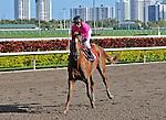 06 February 2010:  Day of Destiny with jockey Javier Castellano wins the Sixth race at Gulfstream Park in Hallandale Beach, FL.