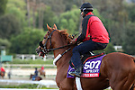ARCADIA, CA  OCTOBER 29: Mind Your Biscuits heading back to the barn at Santa Anita Park, Arcadia, CA on October 29, 2016 (Photo by Casey Phillips/Eclipse Sportswire/Getty Images)