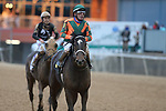 January 23, 2021: Istan Council (6) with jockey Luis Quinonez aboard after the running of the Pippin Stakes at Oaklawn Racing Casino Resort in Hot Springs, Arkansas. ©Justin Manning/Eclipse Sportswire/CSM