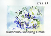 Franco, FLOWERS, BLUMEN, FLORES, paintings+++++,ITZP19,#f#, EVERYDAY
