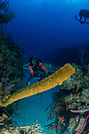 Emily Chen and Yellow Tube Sponge Cuba