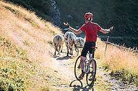 A gravel biking trip and tour to the Sestriere area of Piemonte, Italy. The gravel roads were built for the military and are still used; the Colle delle Finestre and Strada dell'Assietta. With new gravel bikes, the roads are perfect for road bikers seeking off road fun. A man stands laughing at cows blocking the road.