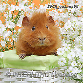 Xavier, ANIMALS, REALISTISCHE TIERE, ANIMALES REALISTICOS, photos+++++,SPCHGUINEA98,#A#, EVERYDAY ,funny