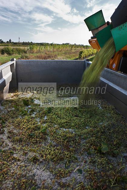 Europe/France/Poitou-Charentes/17/Charente-Maritime/Ile de Ré/Ars-en-Ré: les vendanges