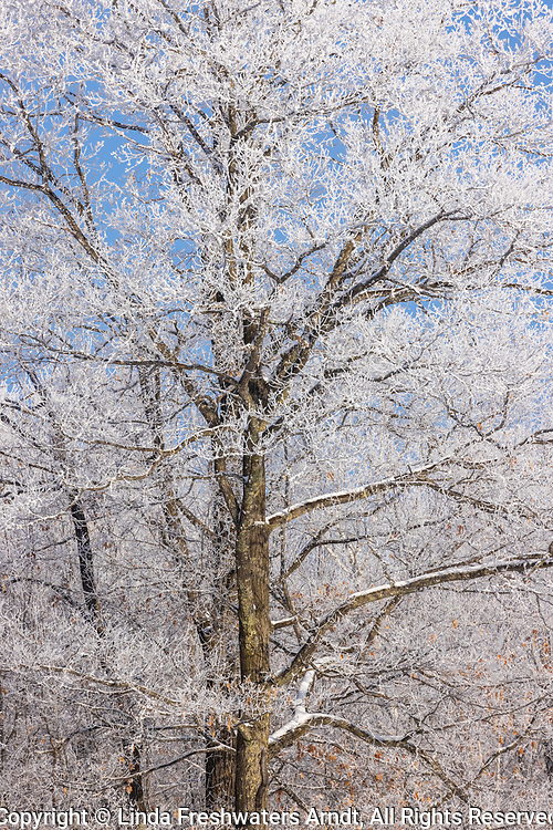 Hoarfrost on a beautiful winter day in northern Wisconsin.