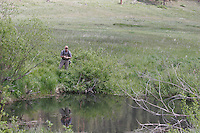 Fishing for Brook Trout in a Beaver Pond, Rocky Mountain National Park, Colorado