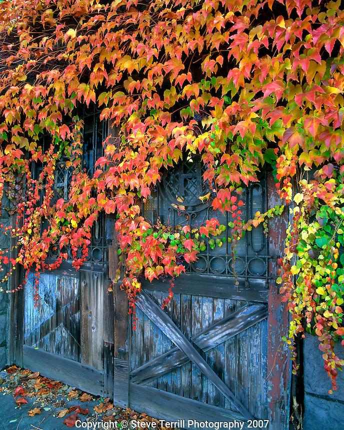 Ivy covered door