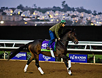 DEL MAR, CA - OCTOBER 29: Ballagh Rocks, owned by Donegal Racing and trained by William I. Mott, exercises in preparation for Breeders' Cup Mile at Del Mar Thoroughbred Club on October 29, 2017 in Del Mar, California. (Photo by Scott Serio/Eclipse Sportswire/Breeders Cup)