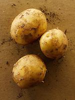 Fresh organic Jersey new Potatoes