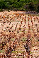 Chateau de Nouvelles. Fitou. Languedoc. The vineyard. France. Europe.
