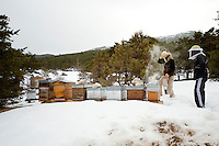 Beekeeper Amanda Dowd smokes her bees in preparation for transhumance while a helper looks on, Seranon, Alpes Maritimes, France, 18 February 2014. After a summer and winter in the mountains, she will move her 12 hives back down to a valley near her home on the French Riviera where the bees can take advantage of the spring flowers already in bloom at lower altitudes, before the Asian hornets hatch out in early summer and start preying on her honeybees.